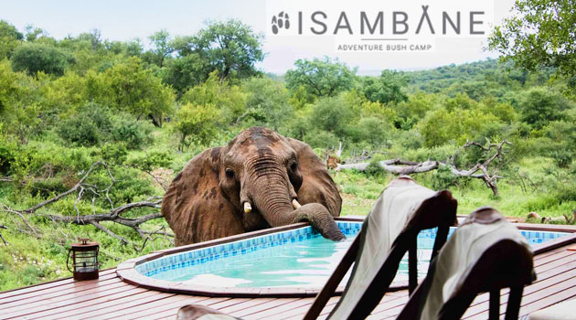ISAMBANE ADVENTURE BUSH CAMP, GREATER KRUGER