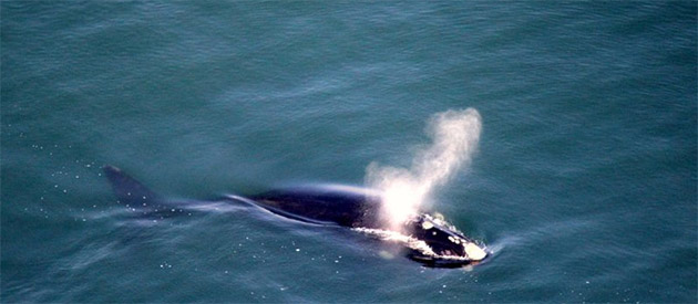 AFRICAN WINGS - Whale Watching Flights & Flying SafarisAFRICAN WINGS - Whale Watching Flights & Flying Safaris