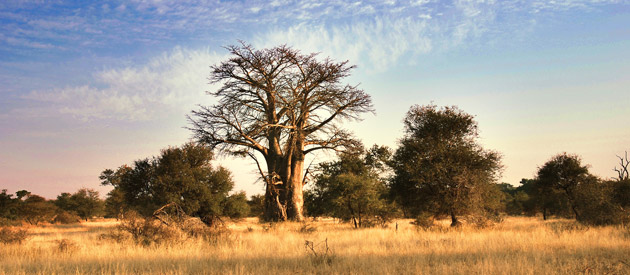 The Kruger National Park is in the Kruger Lowveld region of Mpumalanga in South Africa
